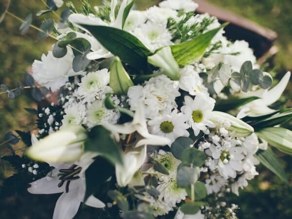 flores variadas de color blanco