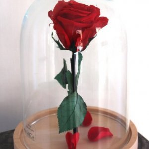 Rosa eterna bella y bestia