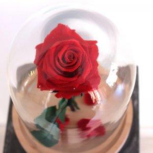 Urna de cristal con rosa bella y bestia preservada en su interior