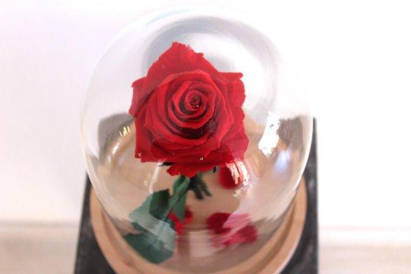 rosa eterna bella y bestia Valencia