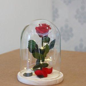 Rosa bella y bestia mágica