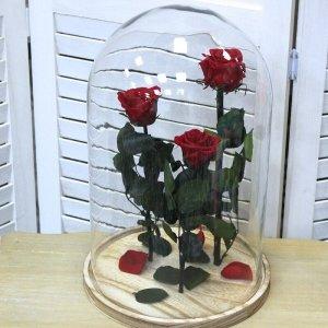 Urna rosas rojas