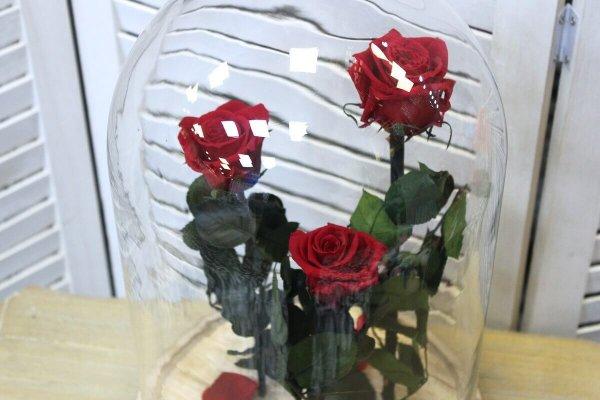 Urna de cristal con tres rosas rojas preservadas en su interior