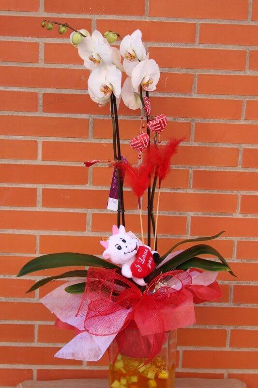 planta de oquídea phalaenopsis de color blanco