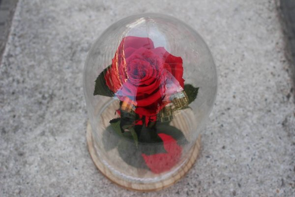 rosa eterna dentro de la urna