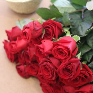 Rosas de calidad