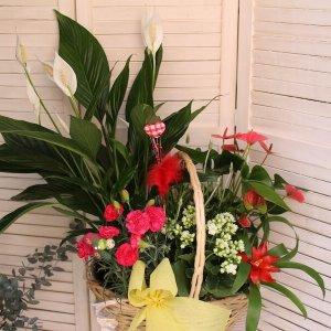 cesta de plantas grande