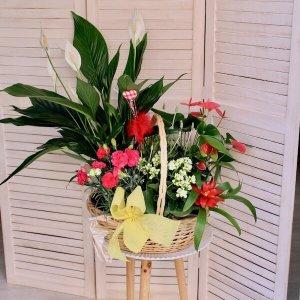 cesta de plantas de tamaño grande
