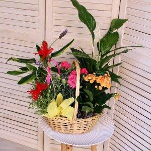 cesta de plantas mediana