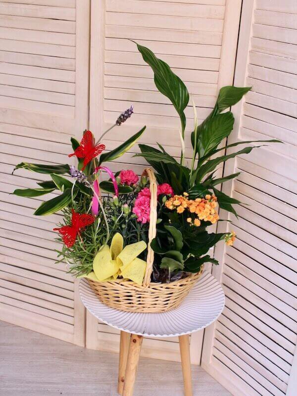 cesta de plantas variadas de tamaño mediano