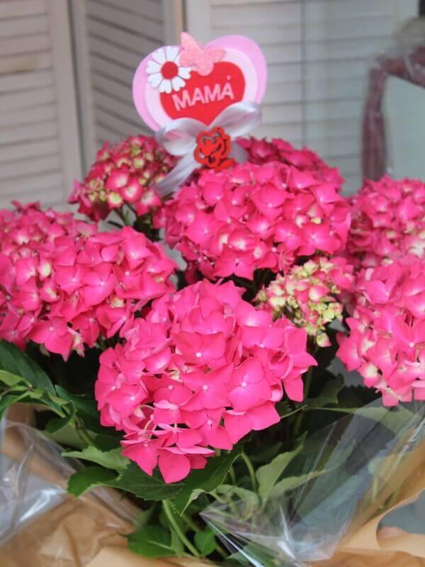planta de hortensia de color fucsia con un pick decorativo de mamá