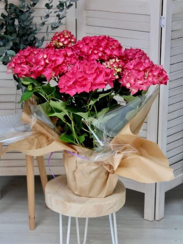 planta de hortensia de color fucsia