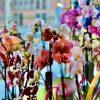 planta natural de orquídea phalaenopsis