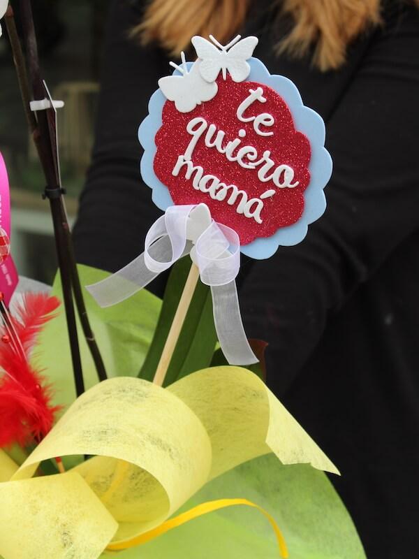Planta de orquídea para regalar el día de la madre