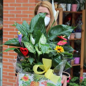Caja de plantas espectacular